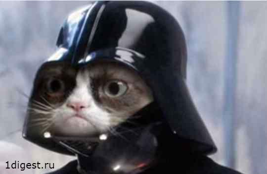 Grumpy Cat фото