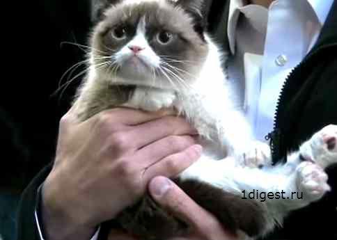 самый угрюмый кот в мире фото