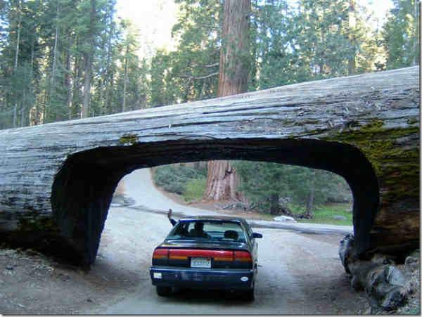 туннель для автомобилей национальный парк Секвойи фото
