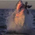 нападение акул на людей, как не стать жертвой акулы
