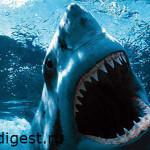 почему нападает акула фото