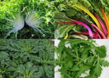 зеленые листовые овощи - самая здоровая пища на земле