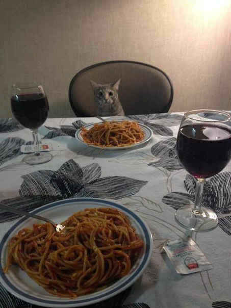 Барсик ужинает - фото