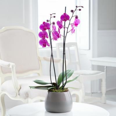 Разведение орхидей в домашних условиях
